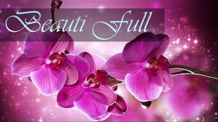 Орхидеи | Обои для рабочего стола