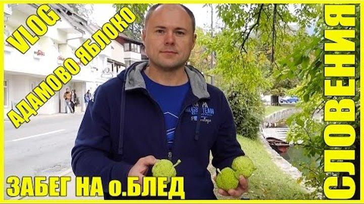 Словения || Забег На Озере Блед || Собираем Адамовы Яблоки
