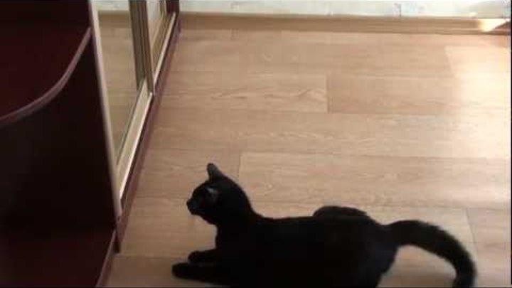 """Марс"" атакует! зеркало! Cat attacks a mirror!"