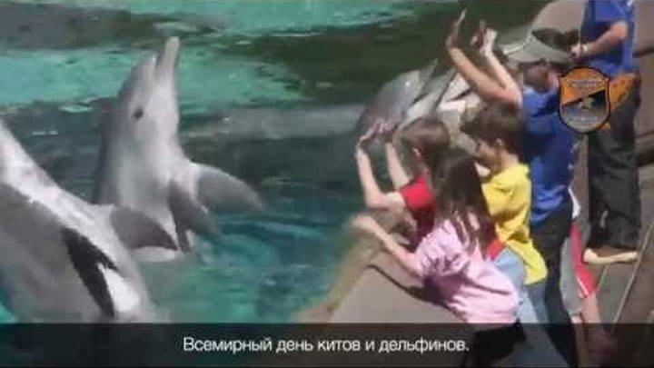 """Всемирный день китов и дельфинов   ОО """"Инициативная Молодежь"""""""