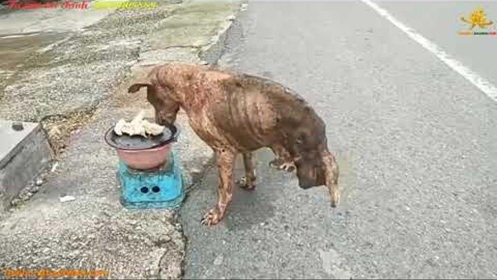 Sự phi thường của chú chó khuyến ai cũng phải rơi lệ