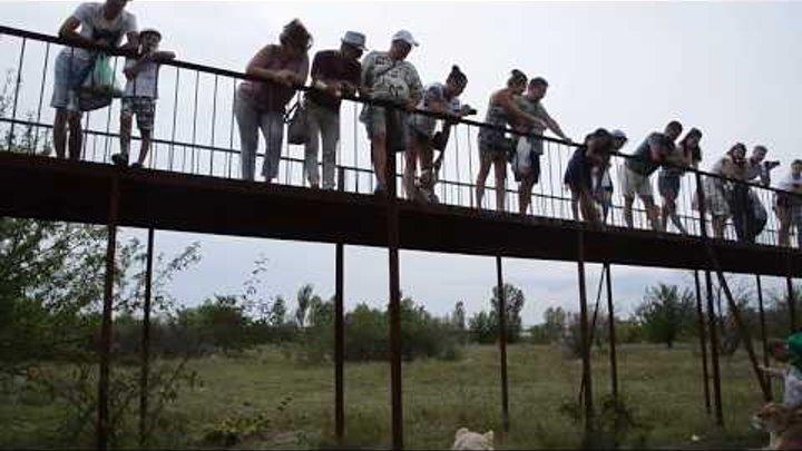 Посетители парка учавствуют в фото-сессии в Сафари ! Тайган .Крым