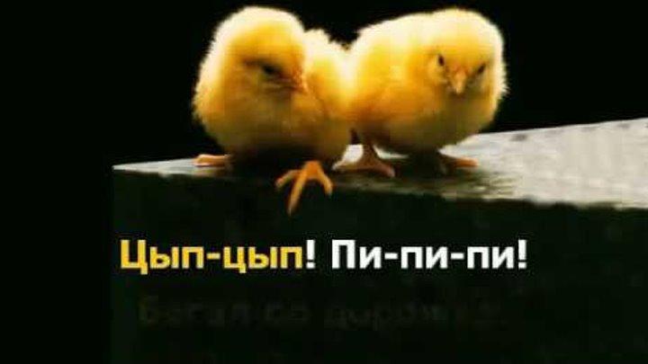 Песенка цыплёнка Исполняет Оксана Макасеева