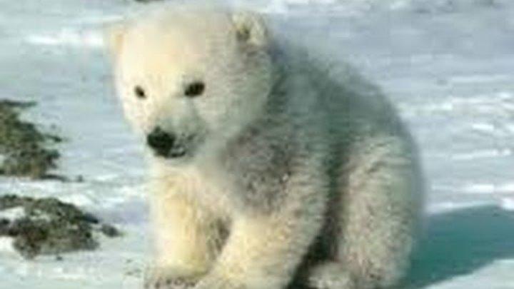 Стихи для детей Агния Барто Медвежонок- невежа, детские сказки, истории для маленьких