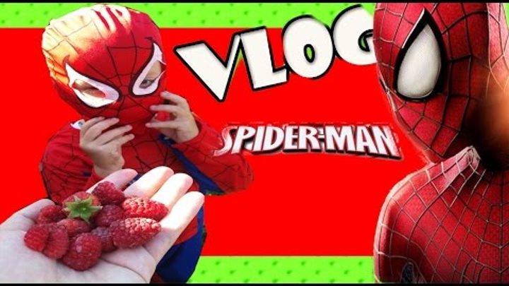 Vlog Кирилл Spider man кушает малинку, ловит рыжего котика, возле речки! Человек Паук Новые серии