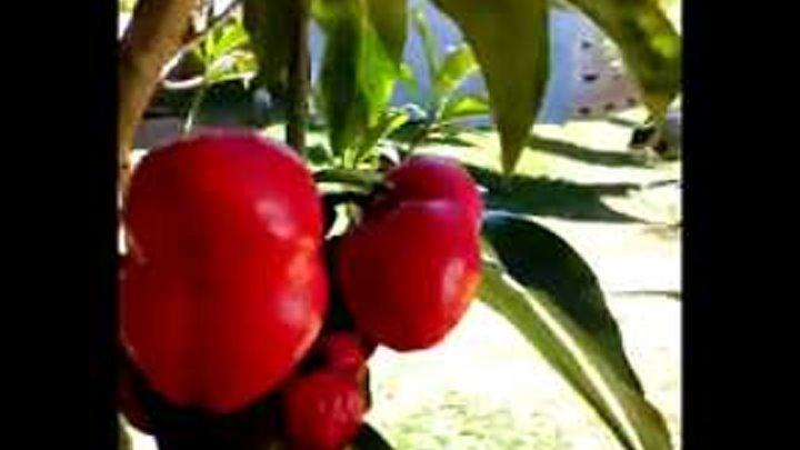 Quien sabe el nombre de esta fruta, Roberto Carvajal Costa Rica