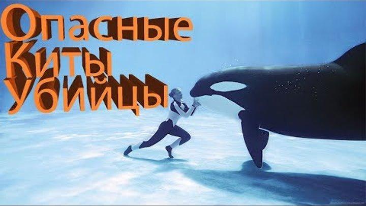 SeaWorld SHAMU Killer Whale Show!!!/Шоу Китов-УБИЙЦ!!!