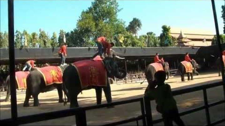 Elephant Show (Шоу Слонов)