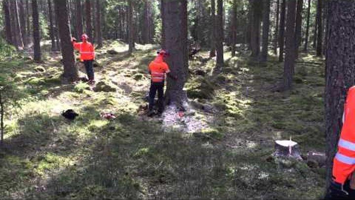 Motorsågs kurs A-B med Martin Nilsson