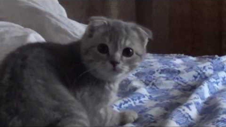 кот фунтик испугался пука...)))