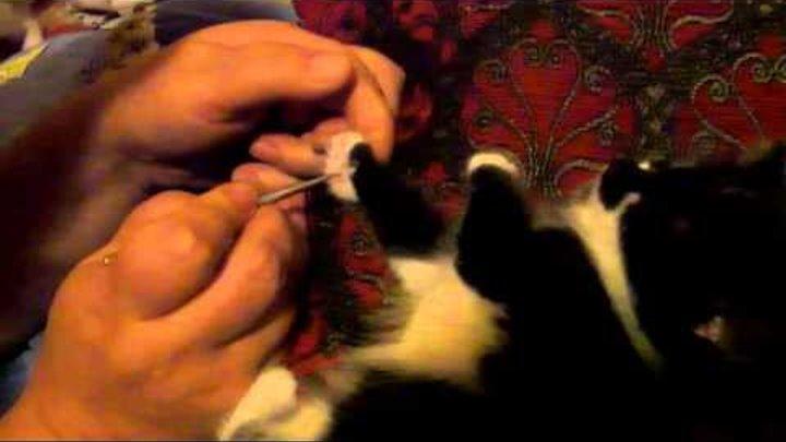 Su jock для кота [су джок терапия].