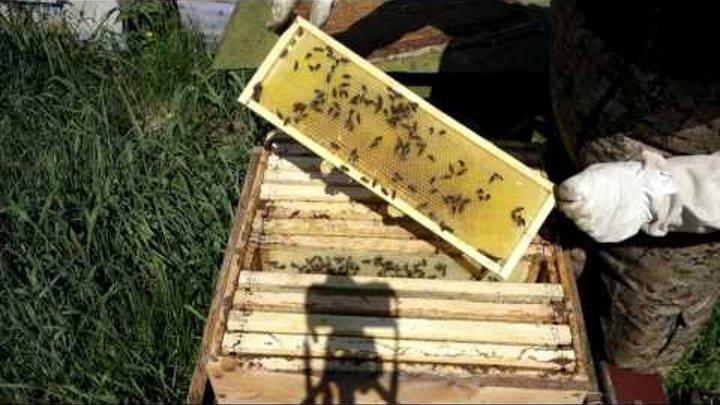 Майский мёд в Свердловской области.