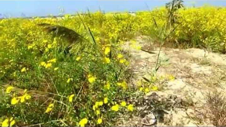 Цветы и Море в октябре!Кирьят-Ям.Израиль.