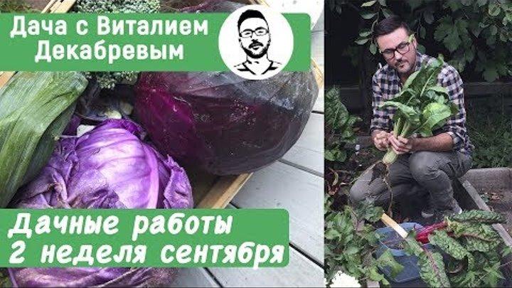 Дачные работы - вторая неделя сентября. Дачные сезоны с Виталием Декабревым.
