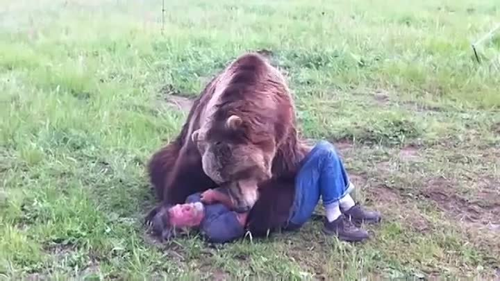 Man TCuddles With A Big Azz Grizzly Bear !!!