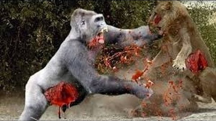 Animal attacks Compilation 2016 - When Animals Attack | Big Battle Animals Real Fight #2