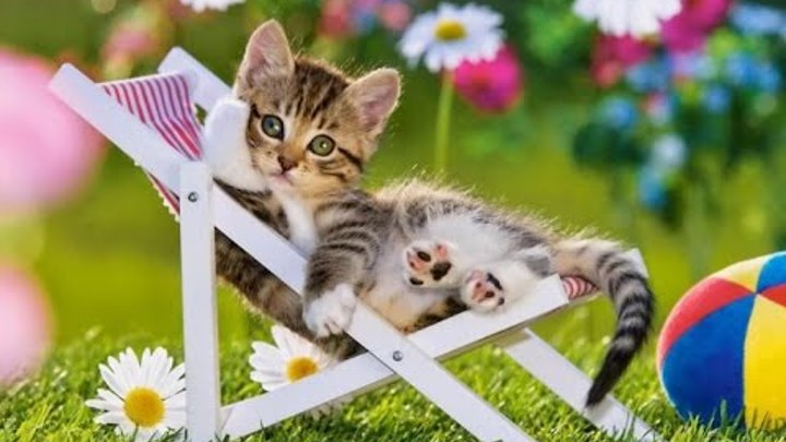 Funny Cats - Funny Kitty Cat Videos Compilation - Cute Kittens Fail Video №41 - Приколы с котами №41