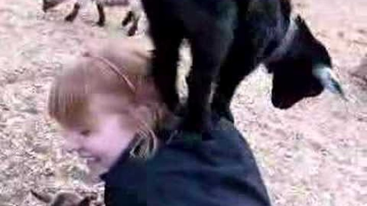 When goats attack