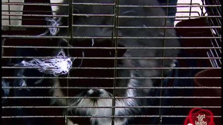Best of Just For Laughs Gags - Best Animal Pranks