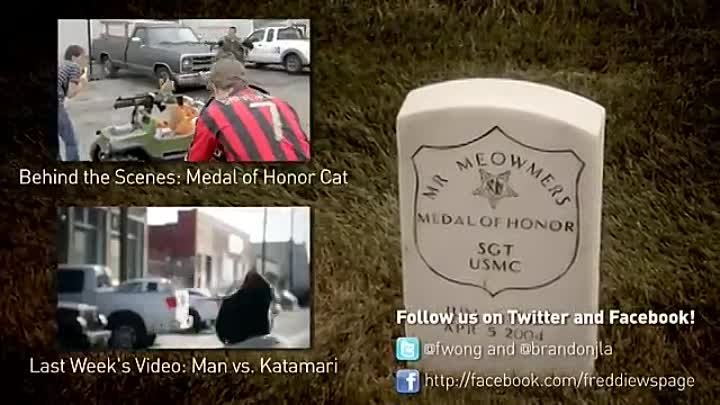 freddiew - Medal of Honor Cat