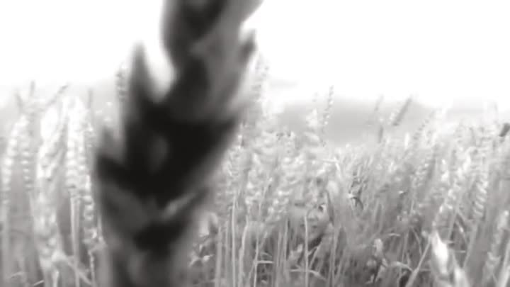 Sting - Fields of Gold (HD)