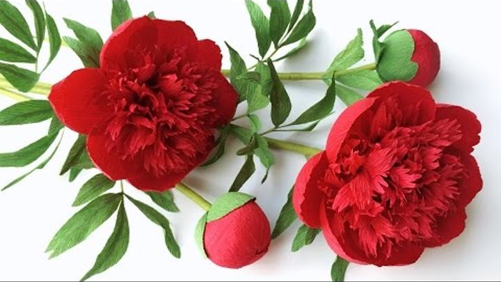 ABC TV | How To Make Red Charm Peony Paper Flower From Crepe Paper - Craft Tutorial