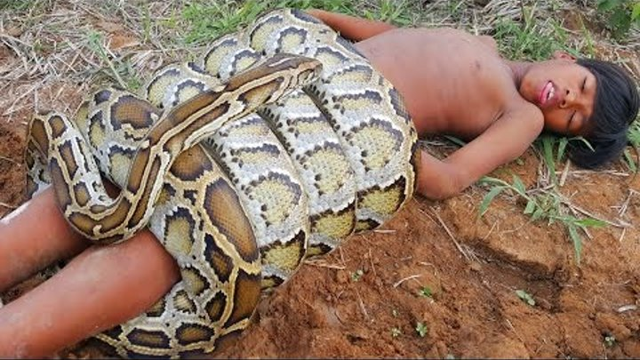 Terrifying!! Brave Boys Catch Two Biggest Snakes While Digging Hole - How To Catch Big Snake Easily