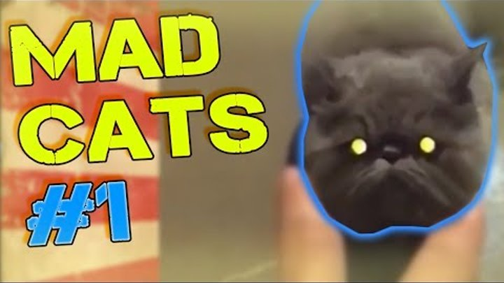 MAD CATS BEST COMPILATION #1