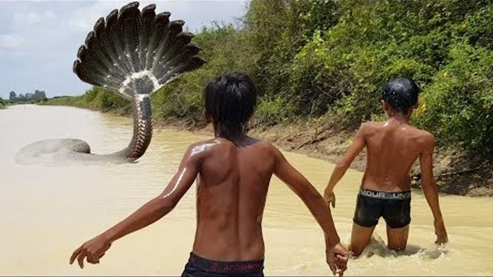 Terrifying!! Brave Boys Catch Big Snake while Spreading Net Trap in the River