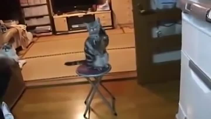 Cat really wants this