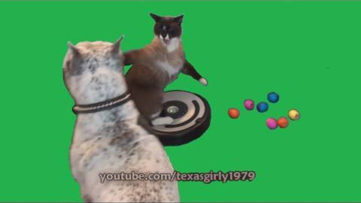 Easter Cat on Roomba ATTACKS Dog pit bull Sharky. PART 2