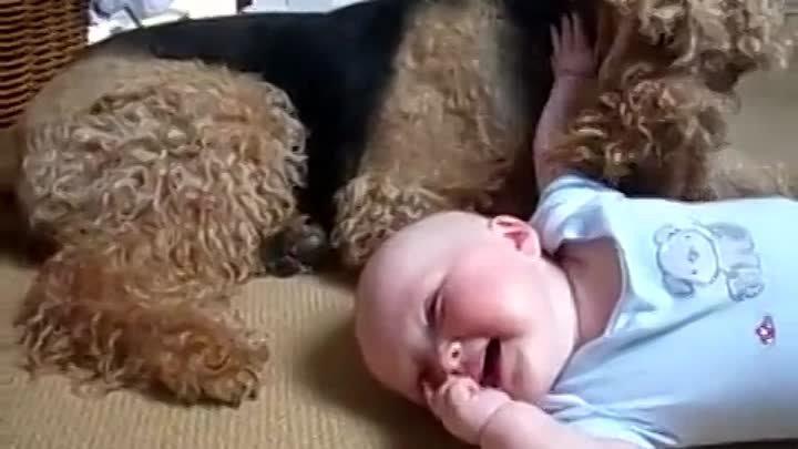 Airedale Terrier and baby - Tickle Time!