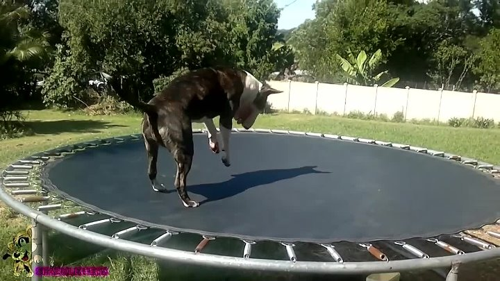 Are Bull Terrier's DANGEROUS Dogs WATCH this to Find Out!