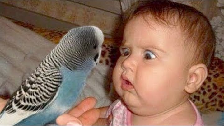 Cute Baby and Parrot Compilation
