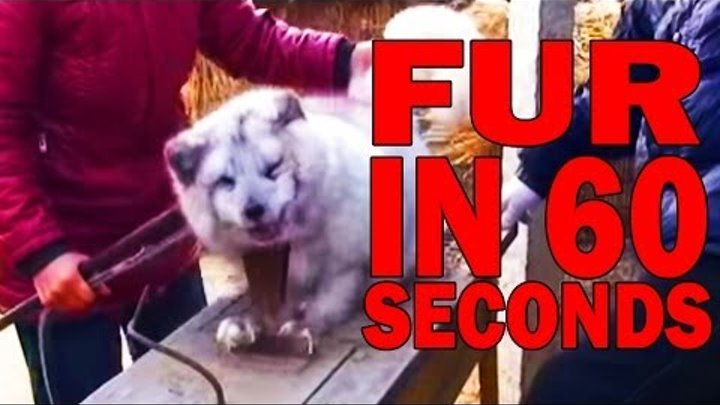 The Fur Industry in 60 Seconds Flat