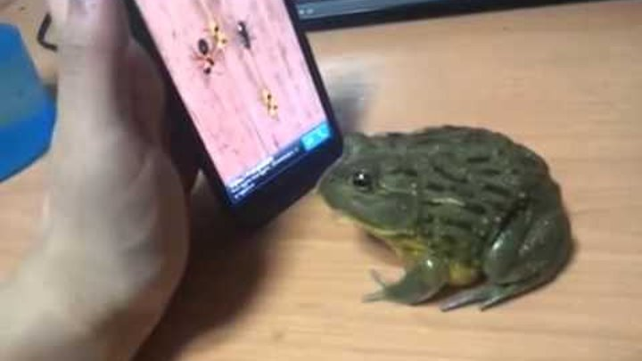 [ Ant Smasher ] Pacman Frog catch some touch screen bugs.