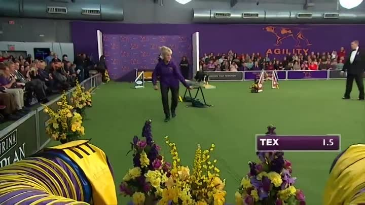 Watch Border Collie, Tex, Win 2015 Masters Agility Championship