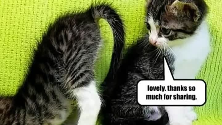 Very Funny Cats 86