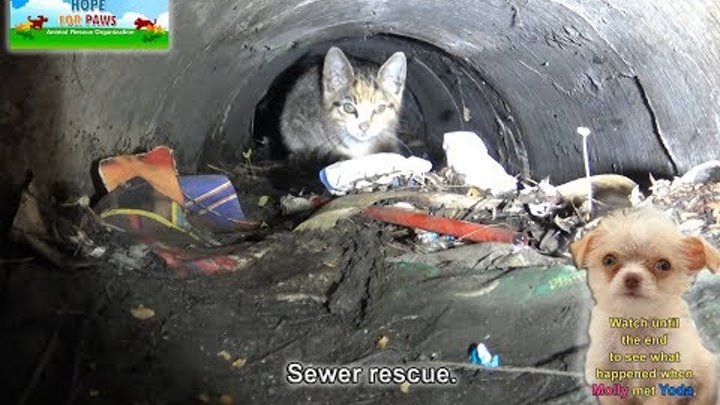 A kitten was stuck in the sewer until a woman heard the calls for help from below! Please share.