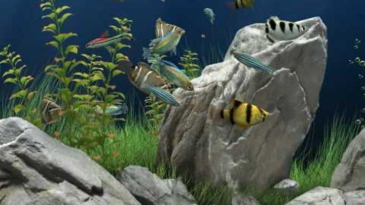 все дреам аквариум тихая установка ясность