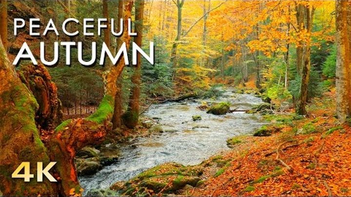 Relaxing Autumn Forest - 4K Beautiful Nature Video & River Sounds - NO MUSIC - 1 hour Ultra HD 2160p