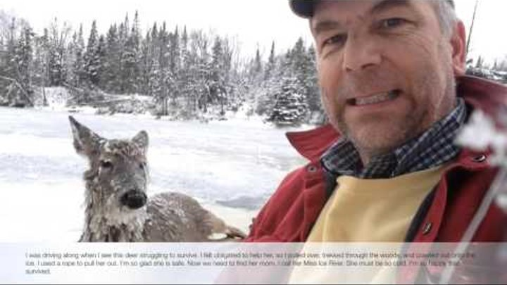 Man Saves Deer From An Icy Grave. (Miss Ice River)