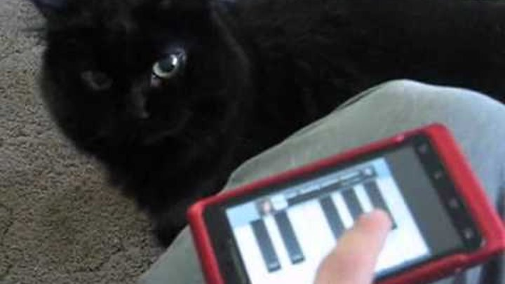 Funny Angry Cat attacks cell phone meow piano app