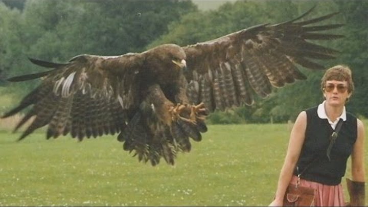 Top BEST Eagle Attacks on Human & Animal - Crazy animal attack people