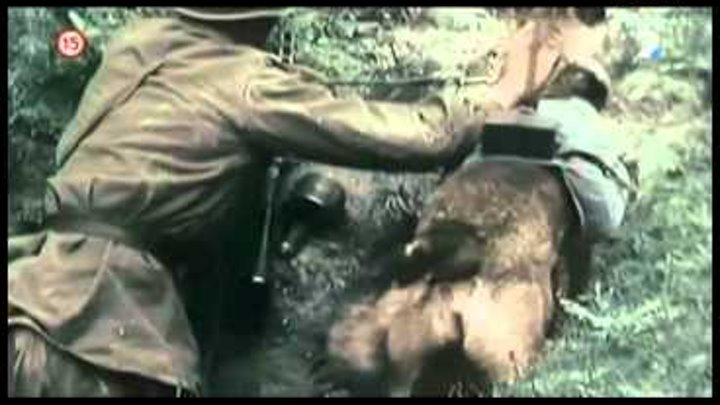 Rare WWII Footage - Anti Tank Dog Mine - Eastern Front Battlefield