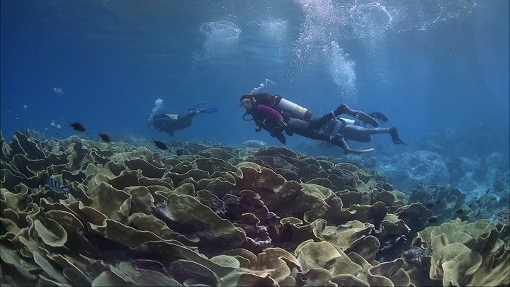 IMAX - Coral.Reef.Adventure.1080p.BluRay.DTS.x264