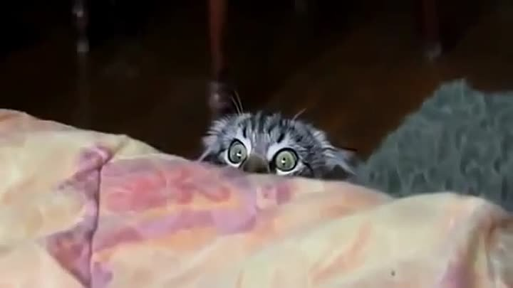 Cat is watching horror movies