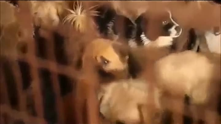 Humans but No Humanity - Yulin Festival 2015 - Original Video