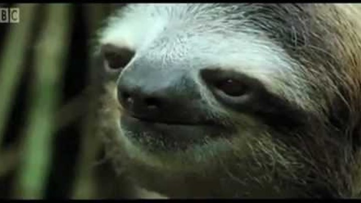 David gets into an awkward moment with a sloth