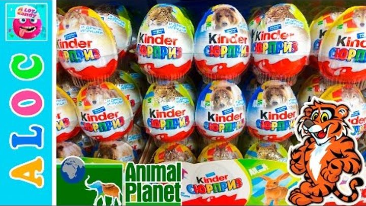 Kinder Surprise Eggs Animal Planet and other Toys for Kids. Opening Surprise eggs